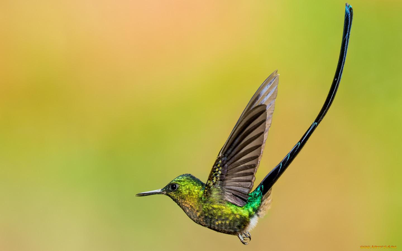 Животные картинка колибри мяча